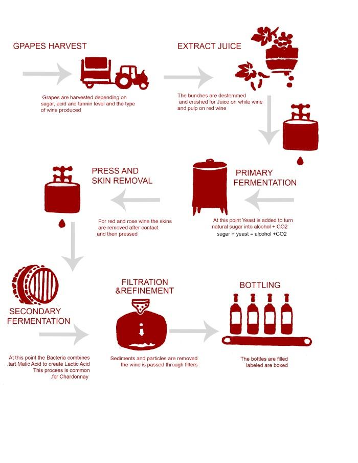 Produzione vino.jpg